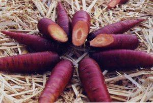 purple-carrot-dalam-vivix-shaklee