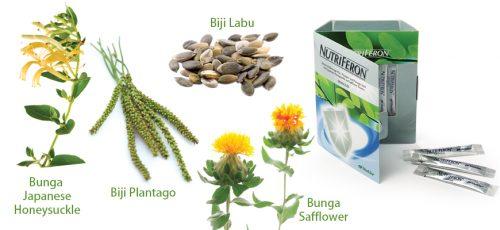 nutriferon-ubat-penawar-rawatan-sakit-demam-denggi.