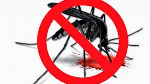 Ubat, Penawar & Rawatan Alternatif Hilangkan Demam Denggi Dengan Cepat